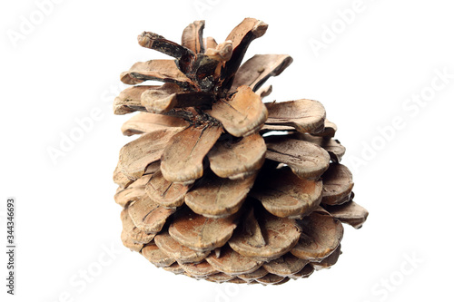 Fotografija Naturally deformed Pine cone without seeds isolated on white background