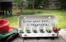 Seedlings Growing In Reused Eg...