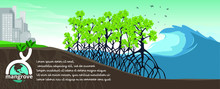 Mangrove Forest Background Vec...