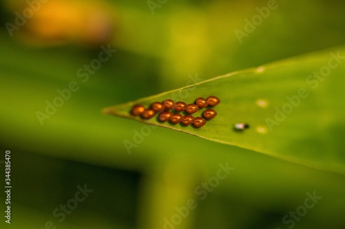 Photo Butterfly Eggs
