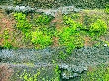 Close Up Of Green Moss On Brick Wall