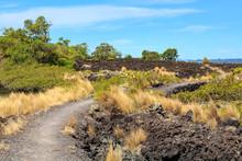 Landscape On Rangitoto Island,...