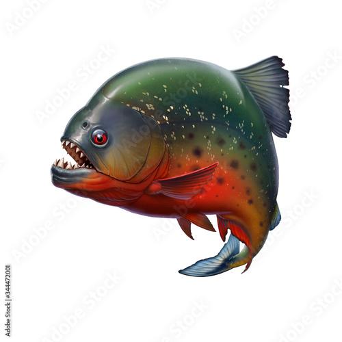 Piranha fish killer attacks big teeth Canvas Print
