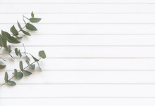 Natural Cosmetics And Leaves Of Fern And Eucalyptus On A Light Background. White Wood Background Fern And Eucalyptus Leaves.