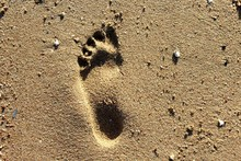 Footprints On The Shore Of The...
