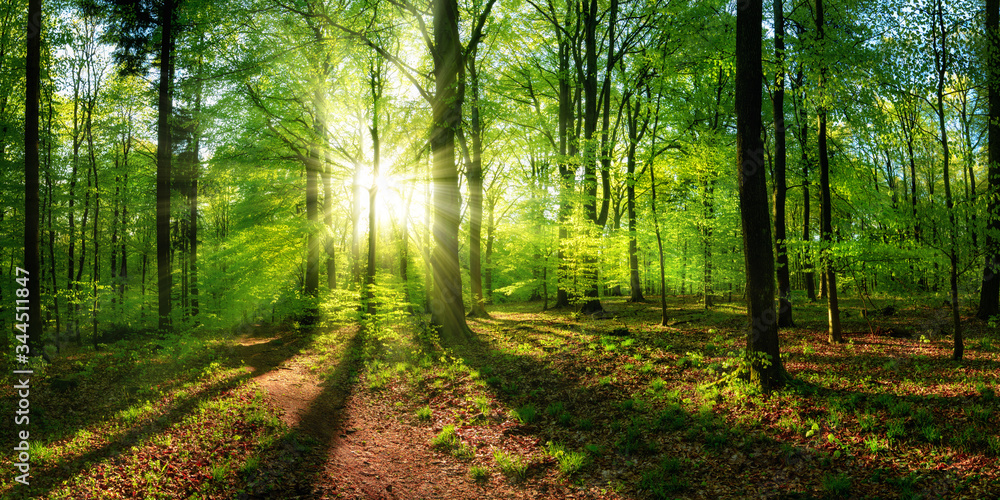 Fototapeta Panoramic landscape: beautiful rays of sunlight shining through the vibrant lush green foliage and creating a dynamic scenery of light and shadow in a forest clearing