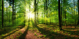 Fototapeta Las - Panoramic landscape: beautiful rays of sunlight shining through the vibrant lush green foliage and creating a dynamic scenery of light and shadow in a forest clearing