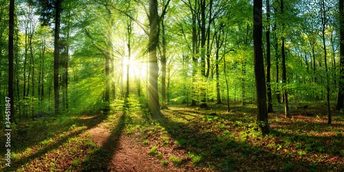 Fototapeta Panoramic landscape: beautiful rays of sunlight shining through the vibrant lush green foliage and creating a dynamic scenery of light and shadow in a forest clearing obraz