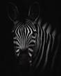 zebra head big hd - BW