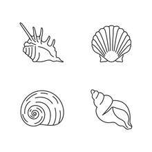 Exotic Sea Shells Pixel Perfect Linear Icons Set. Customizable Thin Line Contour Symbols. Sea Scallop, Moonshell, Triton Conch And Spiked Shell Isolated Vector Outline Illustrations. Editable Stroke