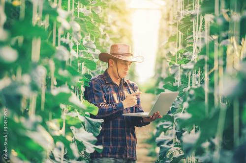 Fototapeta Farming uses modern technology in agriculture. A farmer agronomist with a digital tablet in the green house of a melon farm obraz