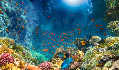 Group of scuba divers exploring coral reef. Underwater sports and tropical vacation concept