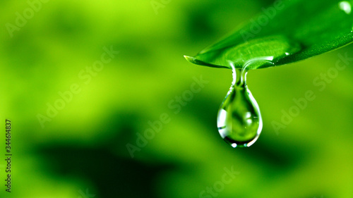 Fotografia fresh green leaf with water drop, relaxation nature concept