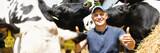 Fototapeta Zwierzęta - happy male farmer on cow farm around herd