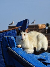 Portrait Of Cat On Blue Boat Against Clear Sky