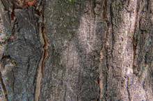 Stylish Tree Bark Texture Background, Brown Ang Gray, Place For Text