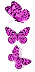 beautiful violet tropical butterflies isolated on a white background. moths for design
