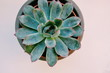 Directly Below Shot Of Succulent Plant Over White Background