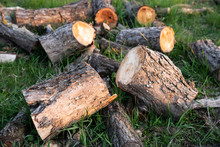 A Small Pile Of Short Sawn And Chopped Firewood, Lying On The Green Grass Of The Yard With Cuts Of The Ends To Front