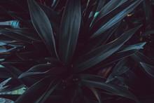 Tropikalne Kwiaty, Rośliny Re...