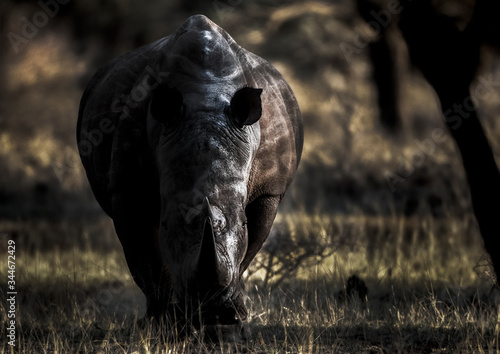 Stunning Endangered White Rhino Photo Canvas Print