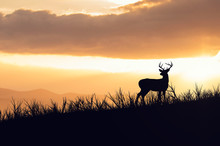 Silhouette Deer Standing On Field Against Sky During Sunset