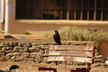 Bird Perching On Wooden Bench