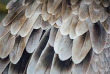 Close-up Of Feathers Of Bird