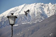 Bird Landing On A Lamppost With Snow-capped Mountain In The Background