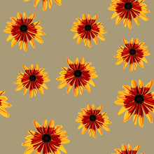 Seamless Floral Pattern With Black-Eyed Susan Flowers. Gloriosa Daisy Blossom. Dwarf Marmalade. Rudbeckia Hirta.