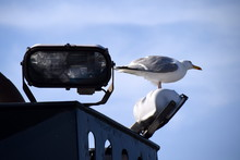 Low Angle View Of Seagull On Halogen Light Against Sky