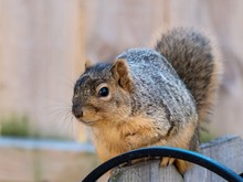 Closeup Shot Of A Squirrel Sit...