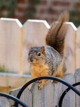 Closeup Shot Of A Squirrel Sit...