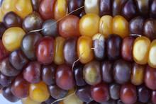 Multicolor Corn