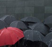 Rain Falling On Umbrellas