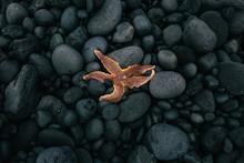 High Angle View Of Starfish On Stones