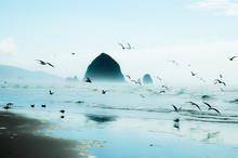Seagulls Flying Over Beach Aga...