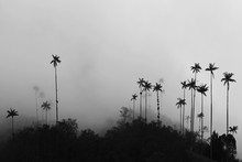 Silhouette Coconut Palm Trees Against Sky During Foggy Weather