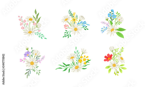 Obraz Daisy Flowers and Meadow Flora with Green Branches Compositions Vector Set - fototapety do salonu