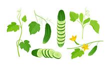 Cucumber Crop With Sliced Elem...