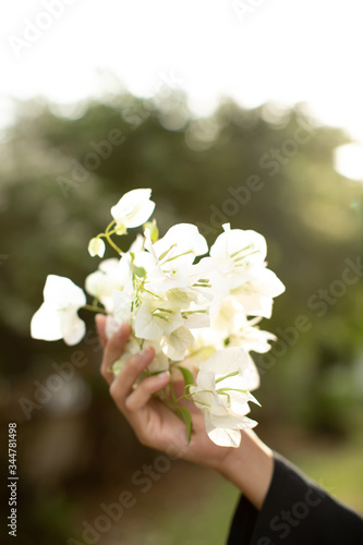 Photo a lady hold a bunch of white bougainvillaea