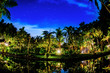 Leinwanddruck Bild - A night scene in the jungle with palm trees lit up