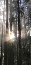 Blazing Sun Behind The Tree