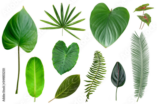 Fototapety, obrazy:  Tropical green leaves isolated on white background. tropical exotic foliage