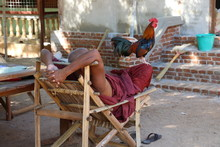 Rooster On Leg Of Monk At Chair