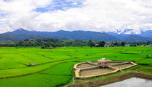 Green Rice Fields And Fog In T...