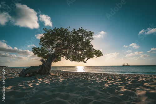 фотография tropical divi divi tree on beach during sunset, Aruba, Caribbean