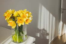 Yellow Daffodils In A Glass Vase Standing In A Sunny Room.