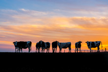 Silhouette Cows On Landscape Against Sky During Sunset
