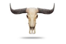Skull, Dead Buffalo, Skull, Ol...